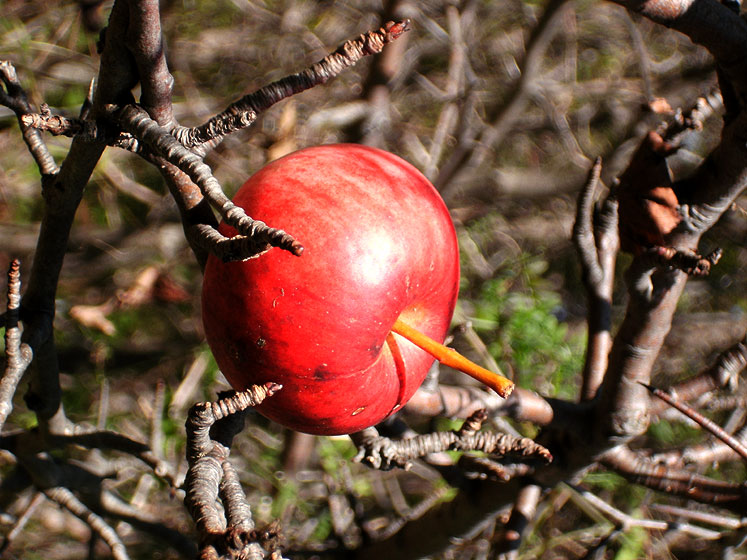 World Travel Photos :: Colors - Rouge :: Toronto Boranical Garden - an apple