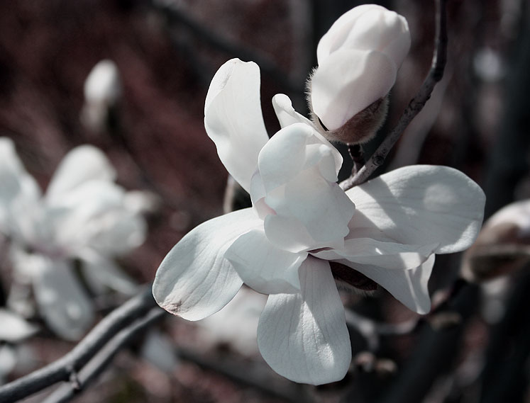 World Travel Photos :: Colors - Blanc :: Toronto. Edwards Gardens - early spring