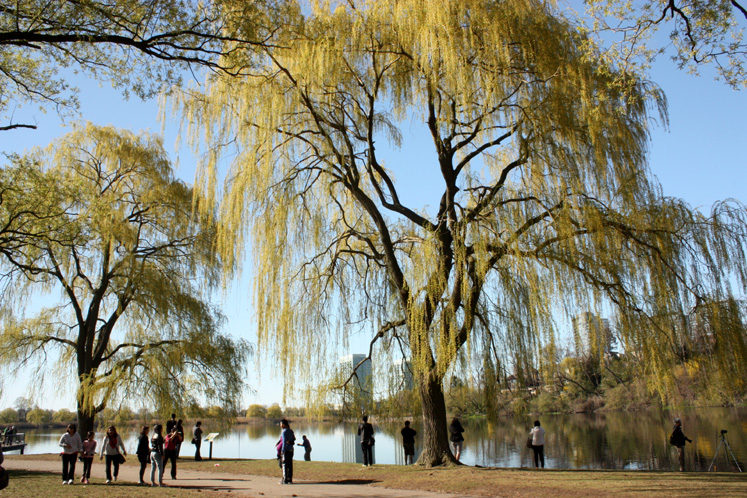 Toronto Photos :: High Park :: Willow trees in High Park