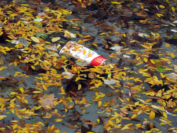 Toronto Photos :: Fall :: Floating leaves in Toronto