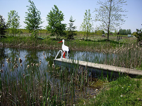 Toronto Photos :: Polin :: Toronto. Pond in Tommy Thompson Park