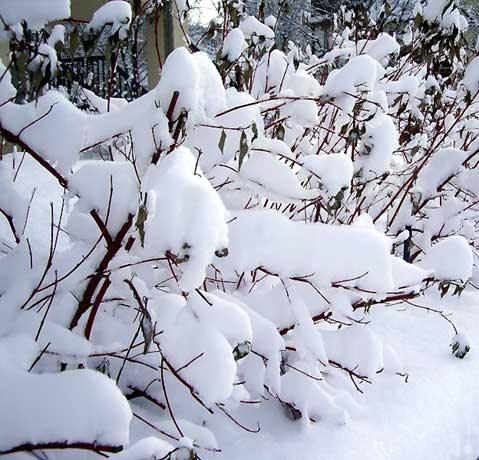 World Travel Photos :: Winter  :: Winter in Toronto