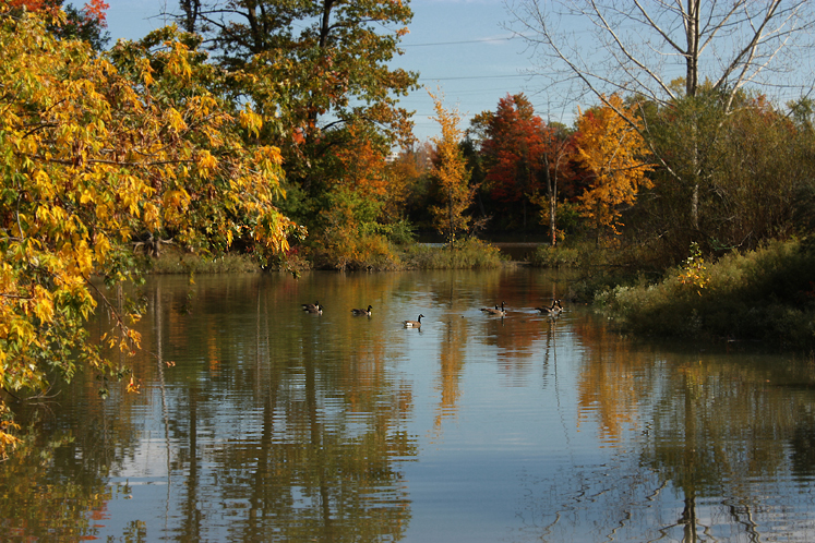 Toronto Photos :: Fall :: North York - Fall - G Ross Lord Park