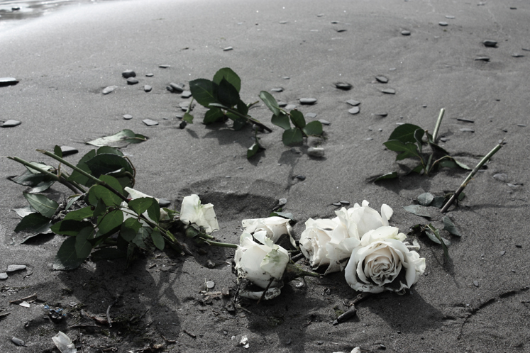 World Travel Photos :: Flowers :: Scarbourough. Bluffer´s Park - roses on the beach