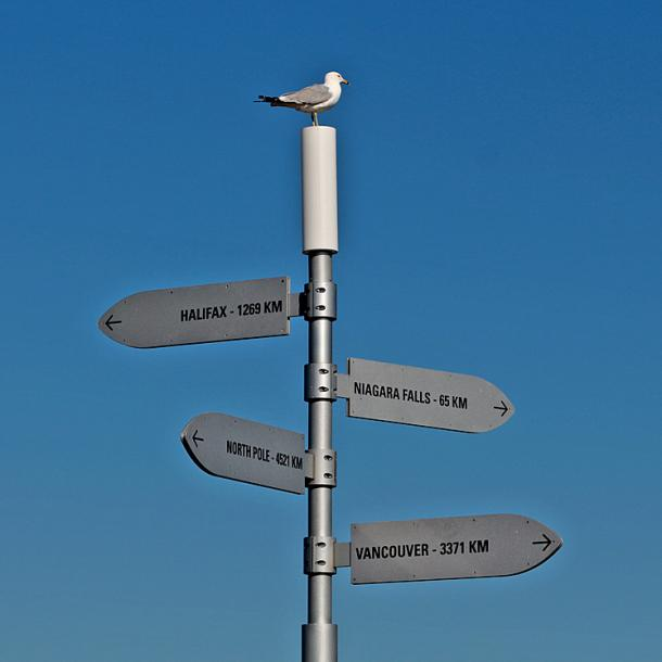 Toronto Photos :: Sergey-Tishin :: Toronto Islands. A seagull at the top of the sign