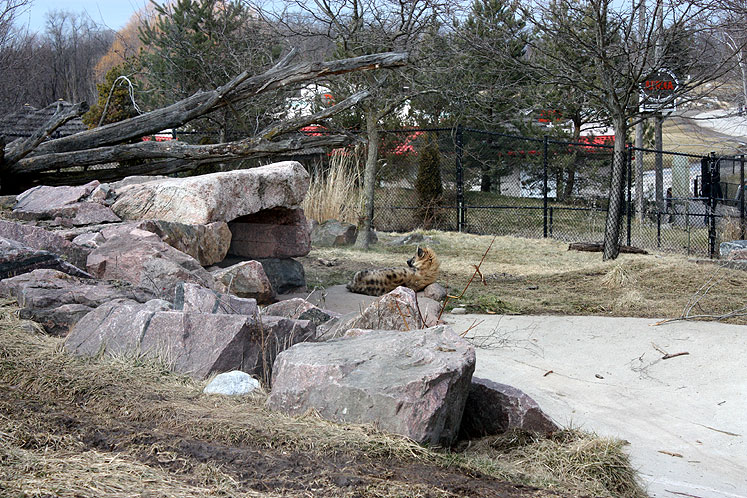 Toronto Photos :: Toronto Zoo :: Toronto Zoo. A hyena is resting near the shelter